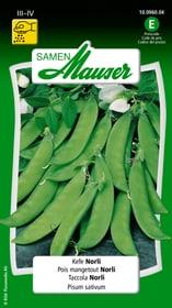 Kefe Norli Gemüsesamen Samen Mauser 650111101000 Inhalt 80 g (ca. 6 - 7 m²) Bild Nr. 1