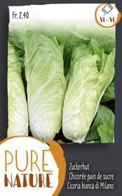 Zuckerhut 5g Gemüsesamen Do it + Garden 287110000000 Bild Nr. 1