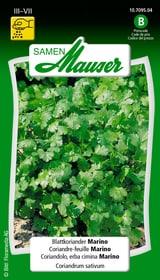 Blattkoriander Marino Kräutersamen Samen Mauser 650119901000 Inhalt 3 g (ca. 300 Pflanzen oder 4-6 m² ) Bild Nr. 1