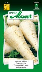 Pastinake, halblang Gemüsesamen Samen Mauser 650119701000 Inhalt 3 g (ca. 300 Pflanzen oder 6 m² ) Bild Nr. 1