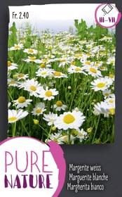 Margerite weiss, einfach 0.75g Blumensamen Do it + Garden 287302600000 Bild Nr. 1
