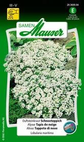 Alisso Tappeto di neve Sementi di fiori Samen Mauser 650105101000 Contenuto 1 g (ca. 200 piante o 6 - 8 m²) N. figura 1