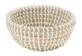 TADEO Coquille 442081200110 Couleur Blanc Dimensions L: 15.0 cm x P: 15.0 cm x H: 5.0 cm Photo no. 1