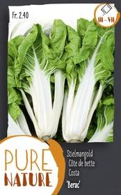 Costa 'Berac' 5g Sementi di verdura Do it + Garden 287113200000 N. figura 1