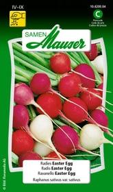 Ravanello Easter Egg Sementi di verdura Samen Mauser 650113602000 Contenuto 5 g (ca. 300-400 piante o 3 m²) N. figura 1