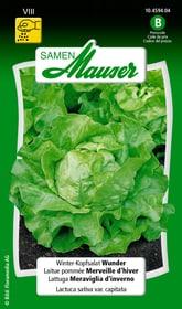 Winter-Kopfsalat Wunder Gemüsesamen Samen Mauser 650116201000 Inhalt 2.5 g (ca. 1000 Pflanzen oder 8 m² ) Bild Nr. 1
