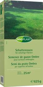 Schattenrasen, 25 m2 Rasensamen Mioplant 659289700000 Bild Nr. 1