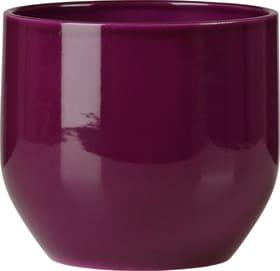Übertopf glänzend Scheurich 657480300000 Farbe Violett Grösse ø: 14.0 cm Bild Nr. 1