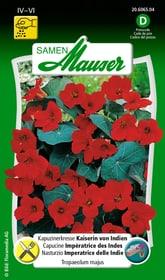 Kapuzinerkresse Kaiserin von Indien Blumensamen Samen Mauser 650107804000 Inhalt 5 g (ca. 25 Pflanzen oder 3 m² ) Bild Nr. 1