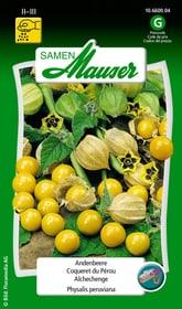 Andenbeere Blumensamen Samen Mauser 650100901000 Inhalt 0.2 g (ca. 50 Pflanzen oder 10 m² ) Bild Nr. 1