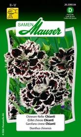 Chinesen-Nelke Chianti Blumensamen Samen Mauser 650103104000 Inhalt 0.5 g (ca. 200 Pflanzen oder 10 m² ) Bild Nr. 1