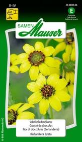 Schokoladenblume Blumensamen Samen Mauser 650117600000 Bild Nr. 1