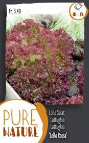 Lattughino 'Lollo Rossa' 2.5g Sementi di verdura Do it + Garden 287111600000 N. figura 1