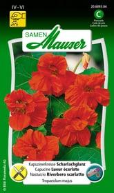Capucine Lueur écarlate Semences de fleurs Samen Mauser 650107808000 Contenu 5 g (env. 25 plantes ou 5 m²) Photo no. 1