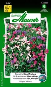 Zwergwicke Bijou, Mischung Blumensamen Samen Mauser 650104604000 Inhalt 5 g (ca. 40 - 50 Pflanzen oder 2 - 3 m² ) Bild Nr. 1