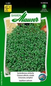 Cresson alénois simple Semences de legumes Samen Mauser 650111601000 Contenu 25 g (env. 0.5 m²) Photo no. 1