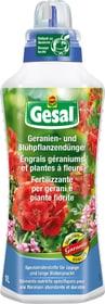 Geranien- und Blühpflanzendünger, 1 l Flüssigdünger Compo Gesal 658229300000 Bild Nr. 1