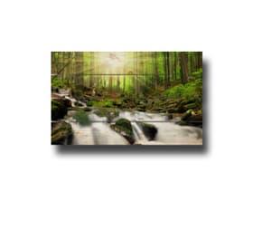 Image sur lames en bois forêt avec soleil