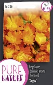 Fiorrancio 'Ringula' 3g Sementi di fiori Do it + Garden 287300800000 N. figura 1