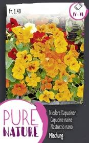 Kapuzinerli Mischung nieder 5g Blumensamen Do it + Garden 287304400000 Bild Nr. 1