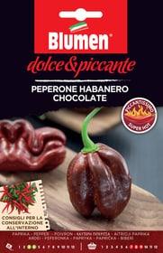 Pepe al cioccolato Habanero Sementi di verdura Blumen 650163100000 N. figura 1