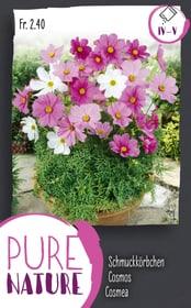 Schmuckkörbchen, Mischung 1g Blumensamen Do it + Garden 287302900000 Bild Nr. 1