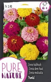 Zinnie 'Pumila' Mischung 1g Blumensamen Do it + Garden 287304800000 Bild Nr. 1