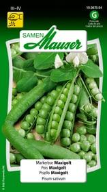 Markerbse Maxigolt Gemüsesamen Samen Mauser 650110201000 Inhalt 80 g (ca. 6 - 7 m²) Bild Nr. 1