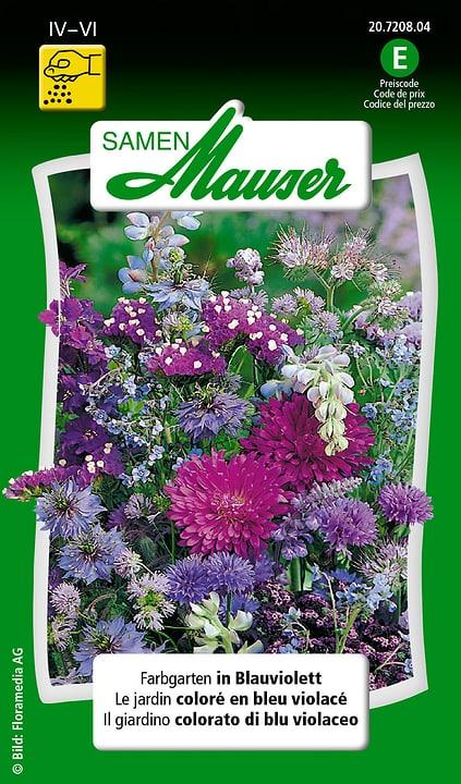 Farbgarten in Blauviolett Samen Mauser 650103701000 Inhalt 3 g (ca. 100 - 150 Pflanzen oder 3 - 4 m² ) Bild Nr. 1