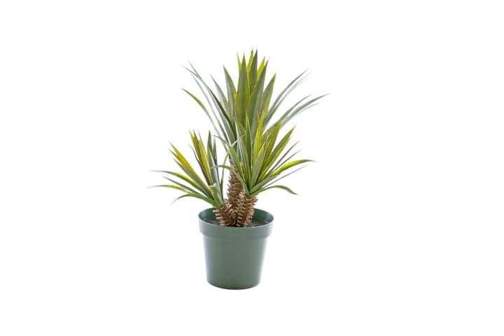 Plante grasse artificielle Star/Aloe Ferox Do it + Garden 658959200000 N. figura 1
