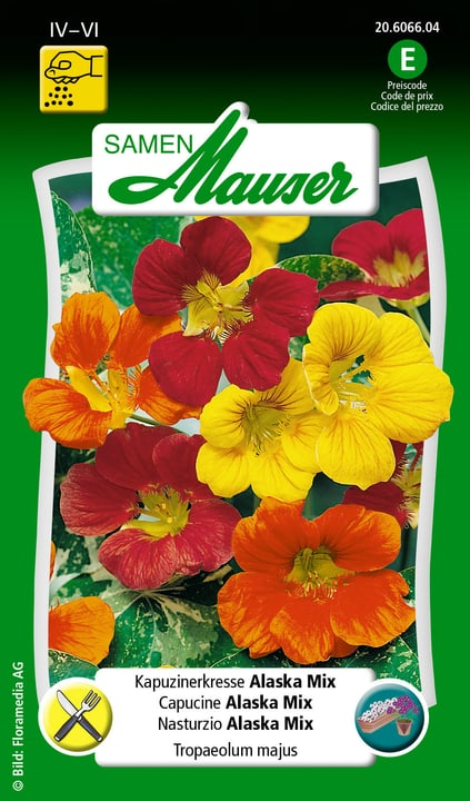 Nasturzio Alaska Mix Semente Samen Mauser 650107801000 Contenuto 3 g (ca. 25 piante o 3 m²) N. figura 1