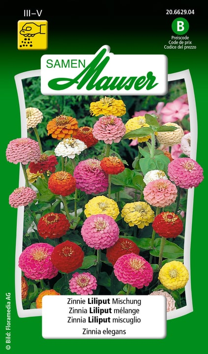 Zinnia Liliput miscuglio Semente Samen Mauser 650108407000 Contenuto 1 g (ca. 50 piante o 3 - 4 m²) N. figura 1