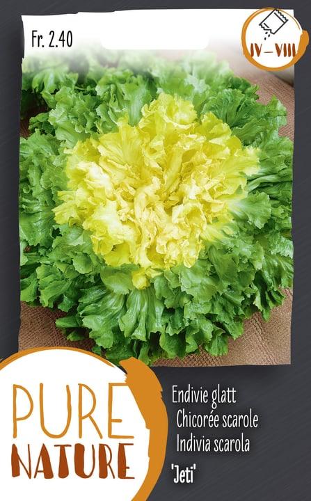 Chicorée scarole 'Jeti' 2.5 Semences de legumes Do it + Garden 287110200000 Photo no. 1