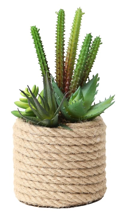 Art Succulente in vaso juta Do it + Garden 656548800001 Taglio L: 12.0 cm x P: 12.0 cm x A: 21.0 cm N. figura 1