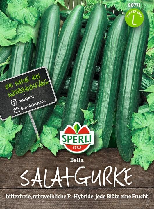 Salatgurken Bella Semences de legumes Sperli 650180800000 Photo no. 1