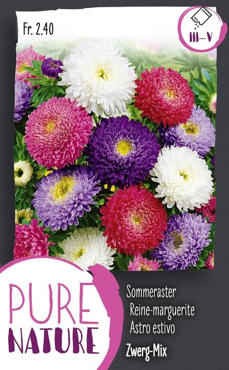 Reine-marquerite double naine, en mélang Semences de fleurs 287302200000 Photo no. 1
