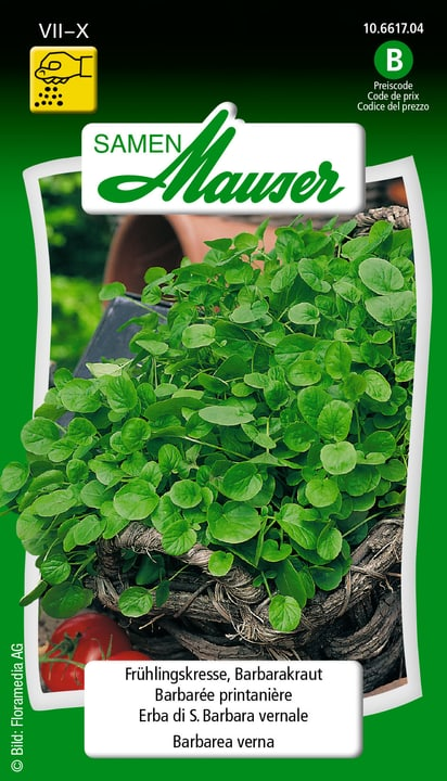 Barbarée printanière Samen Mauser 650119305000 Contenu 2.5 g (env. 500 plantes ou 5 m Photo no. 1