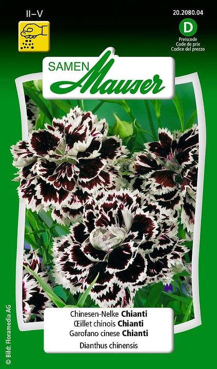 Garofano cinese Chianti Semente Samen Mauser 650103104000 Contenuto 0.5 g (ca. 200 piante o 10 m²) N. figura 1