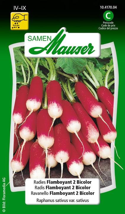 Ravanello Flamboyant 2 Bicolor Semente Samen Mauser 650113601000 Contenuto 5 g (ca. 300 - 400 piante o 3 m²) N. figura 1