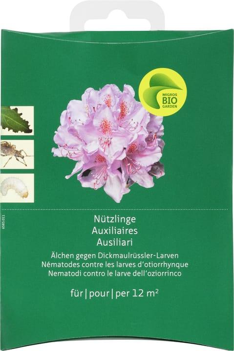 Auxiliaires tylenchus contre larves d'otiorrhynques Migros-Bio Garden 658501100000 Photo no. 1