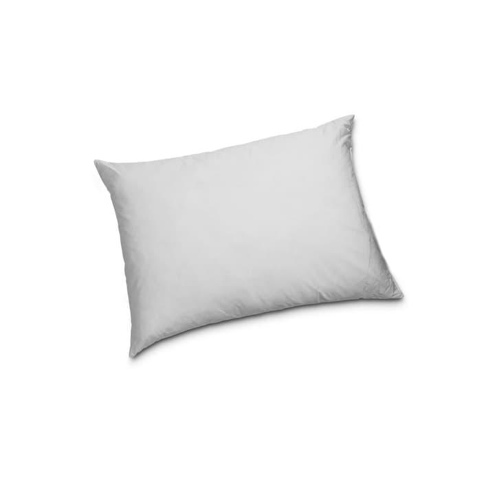 CLASSIC LOW Oreiller 376050800000 Couleur Blanc Dimensions L: 70.0 cm x L: 50.0 cm Photo no. 1