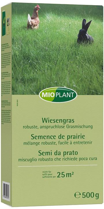 Wiesengras, 25 m2 Mioplant 659289100000 Bild Nr. 1