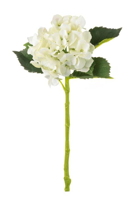 HORTENSIE Fleur artificielle 440602700411 Colore Giallo chiaro Dimensioni A: 47.0 cm N. figura 1