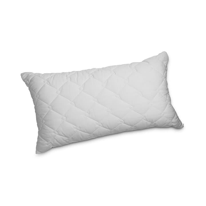SIMPLE Oreiller synthétique 376049700000 Couleur Blanc Dimensions L: 65.0 cm x L: 100.0 cm Photo no. 1