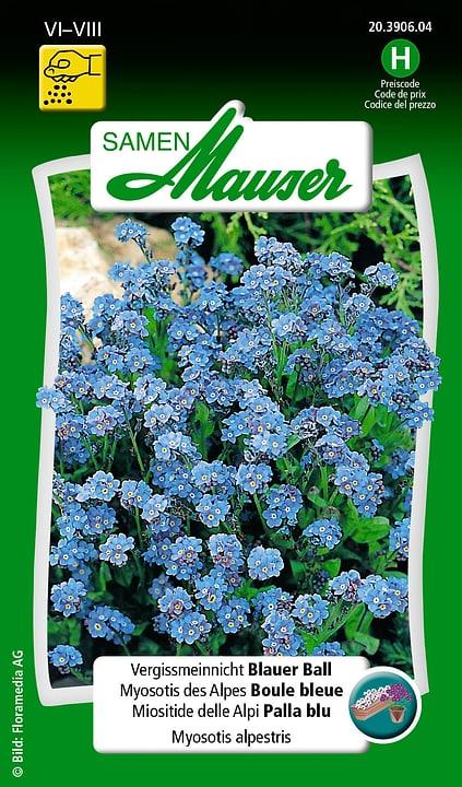 Miositide delle Alpi Palla blu Semente Samen Mauser 650105501000 Contenuto 0.75 g (ca. 100 piante o 5 m²) N. figura 1