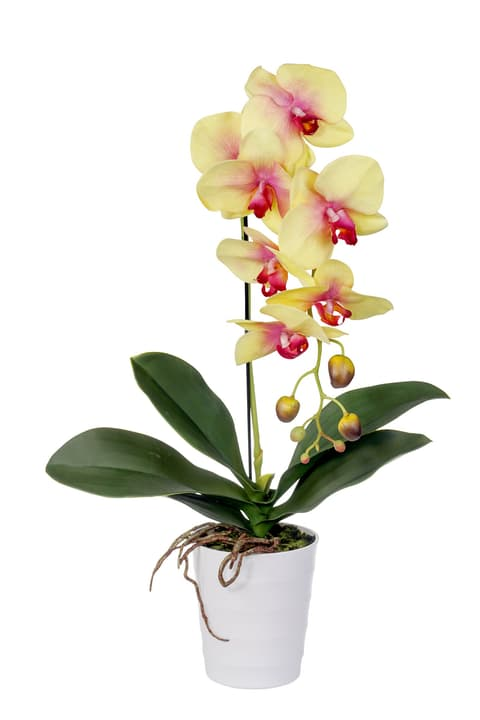 Pianta artificiale, Phalaenopsis, gialla Do it + Garden 658956000000 Photo no. 1
