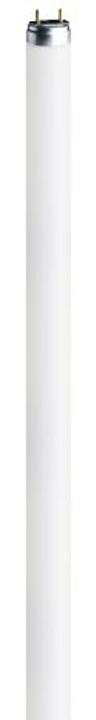 Tubo Fluor.G5 28W 840 Osram 421010200000 N. figura 1