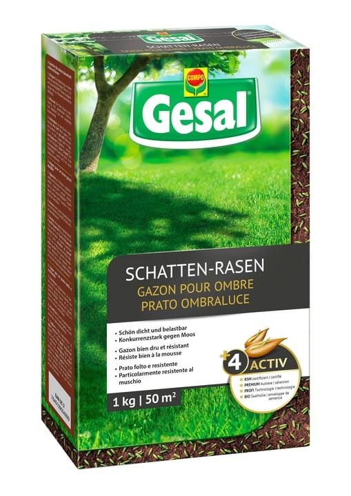 Schatten-Rasen, 1 kg Compo Gesal 659211500000 Bild Nr. 1
