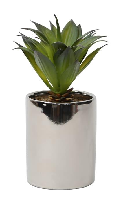 Art Succulente in Piatto d'argento, lungo, 15x15x22cm Do it + Garden 656548500002 Colore Argenteo Taglio L: 15.0 cm x P: 15.0 cm x A: 22.0 cm N. figura 1