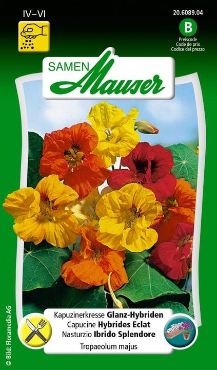 Capucine  Hybrides Eclat Semence Samen Mauser 650107807000 Contenu 5 g (env. 25 plantes ou 5 m²) Photo no. 1